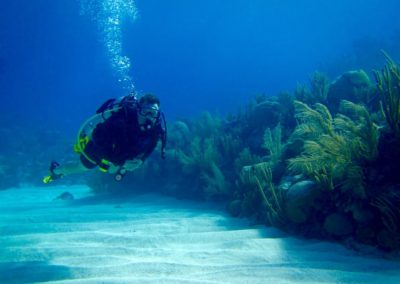 Steve Blum scuba diving and swimming toward camera