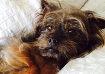 Chloe the ewok-looking dog laying on her side and looking at the camera